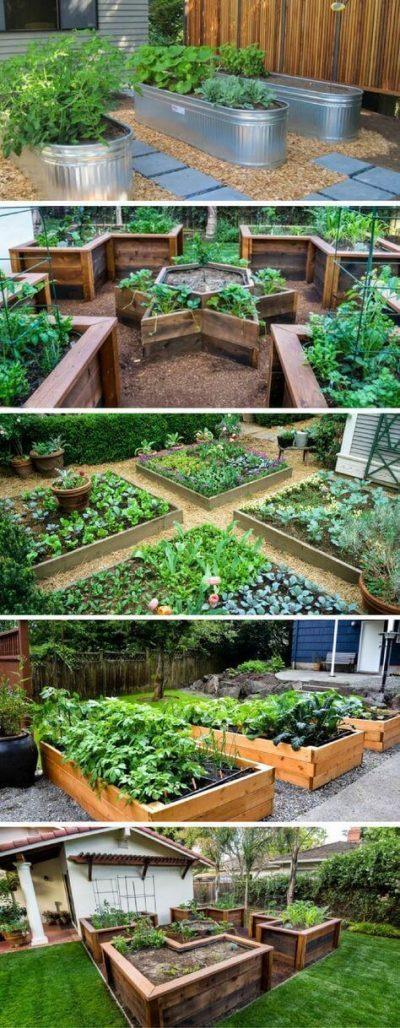 gradini cu flori, fructe si legume2