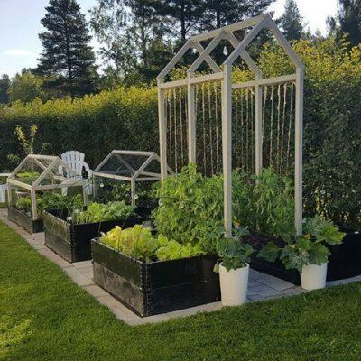 gradini cu flori, fructe si legume4
