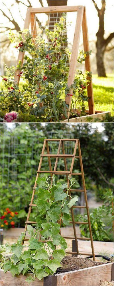 gradini cu flori, fructe si legume7