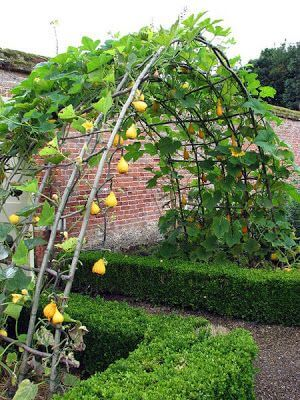 gradini cu flori, fructe si legume8
